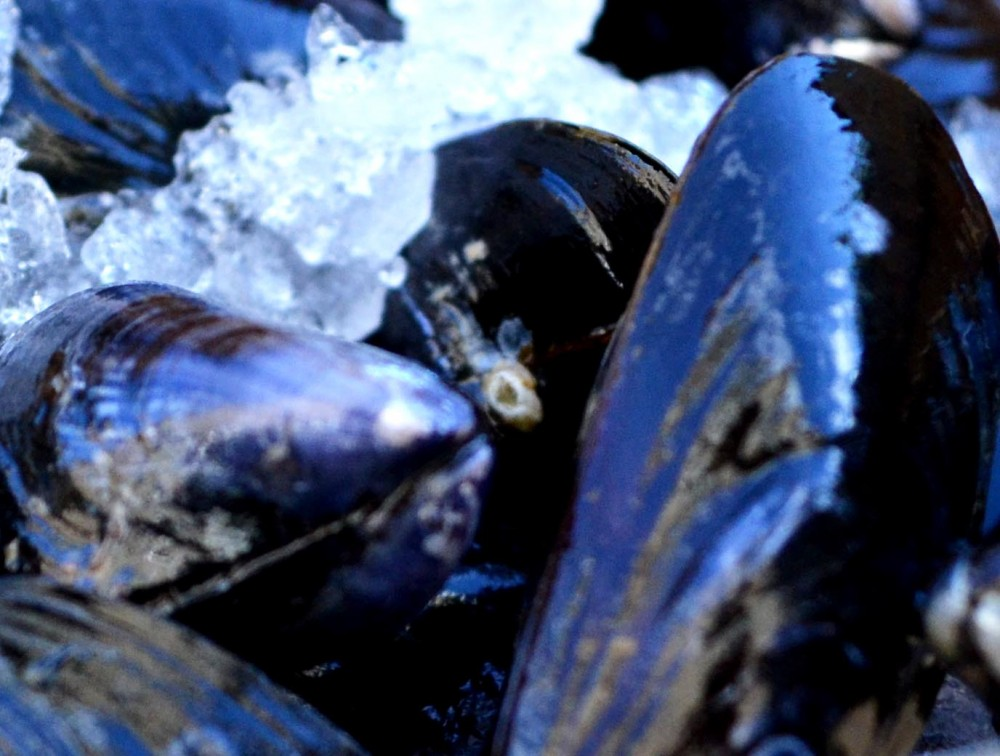 mussels_ice3