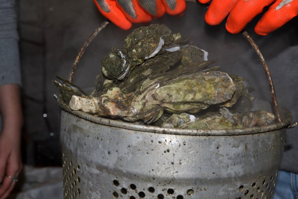 oysters_steamed
