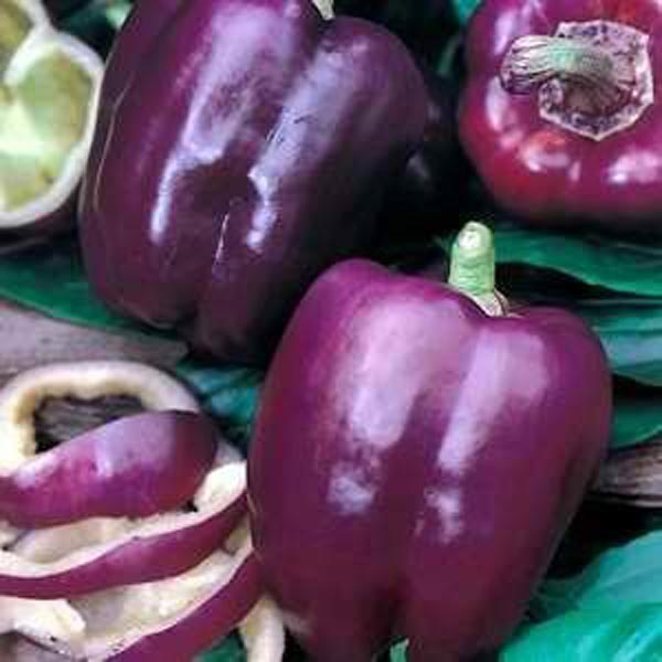 Purple Beauties form Egmont Seed Company