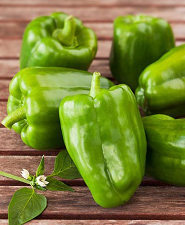 Green Bell Pepper from Bonnie Plants