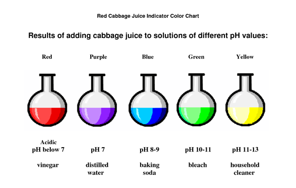 Red Cabbage Indicator College Paper Service